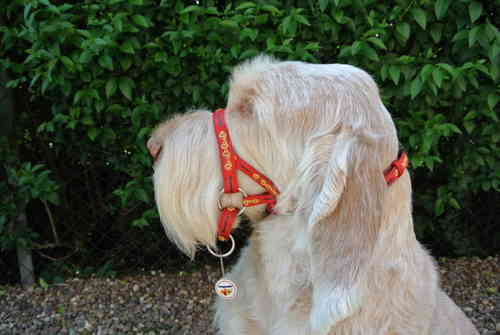 Dogmatic Headcollar - PCW Red/Silver