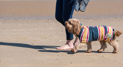 Ruff & Tumble Design Collection Dog Drying Coat - Beach